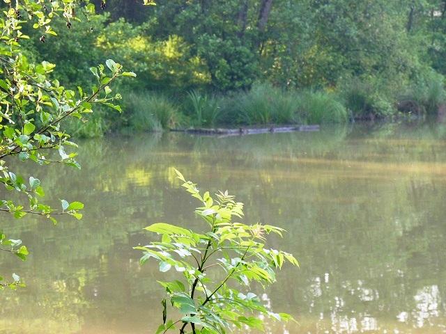 http://www.puyravaudcarp.com/wp-content/uploads/2016/08/heron_lake_6.jpg