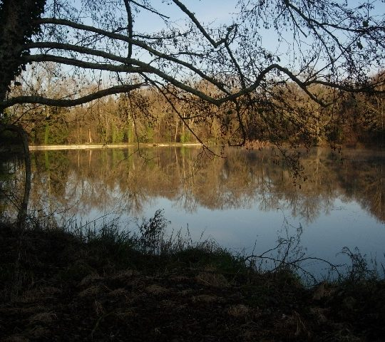 http://www.puyravaudcarp.com/wp-content/uploads/2016/08/lake_from_reeds_swim_20091212_1184091076-540x480.jpg