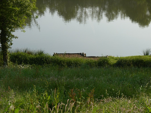 https://www.puyravaudcarp.com/wp-content/uploads/2016/08/heron_lake_2.jpg