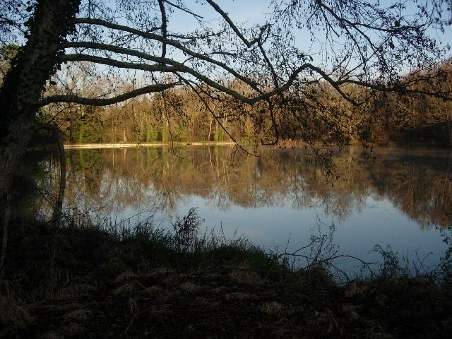 https://www.puyravaudcarp.com/wp-content/uploads/2016/08/lake_from_reeds_swim_20091212_1184091076.jpg
