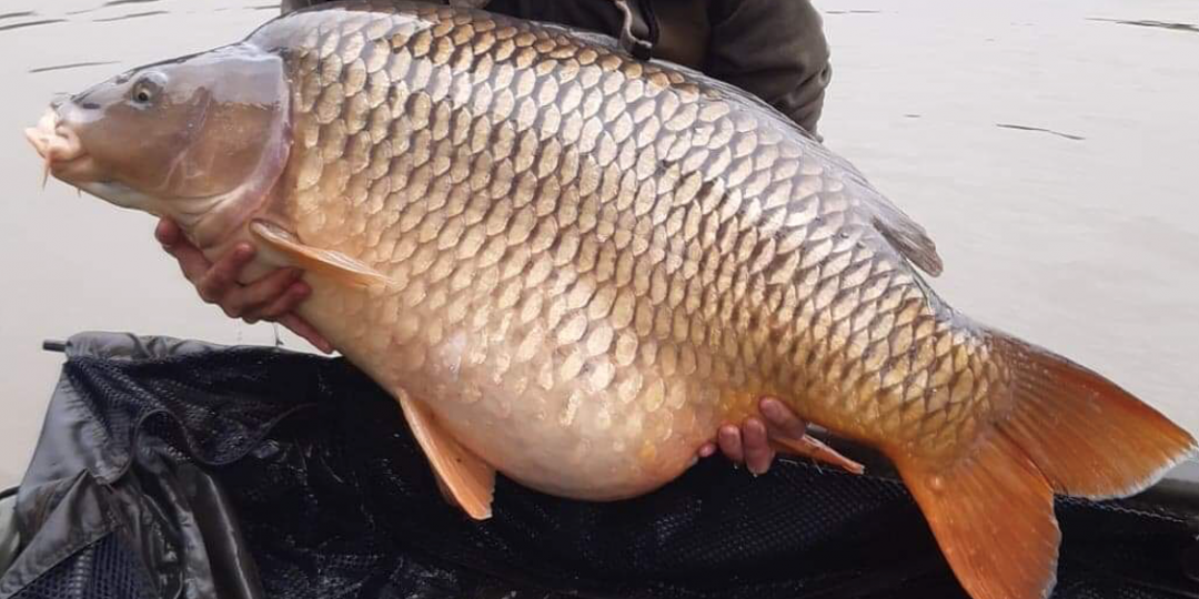 https://www.puyravaudcarp.com/wp-content/uploads/2020/10/Carls-lake-record-common-1080x540.png